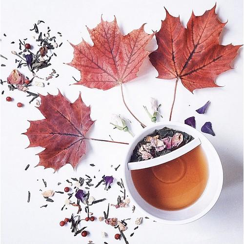 Teacup_White_70202